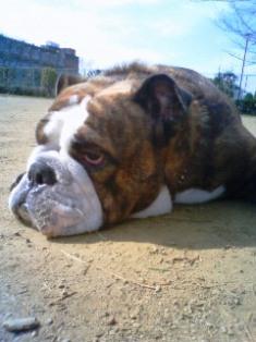 公園で寝る!