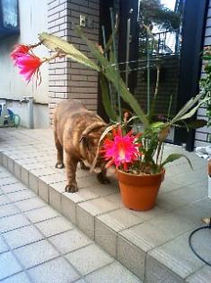 大きなお花~~