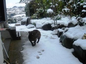 雪だー走る!