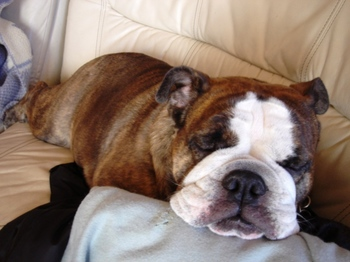 ソファーで寝る